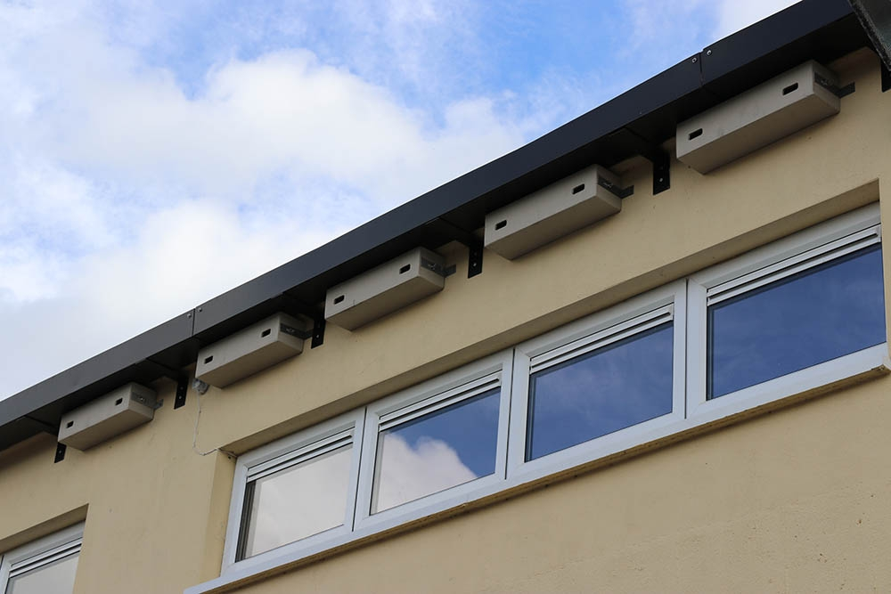 Installed nest boxes at the Patrician Boys' Secondary School, Newbridge, Kildare