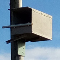 Kestrel Nest Box with perch